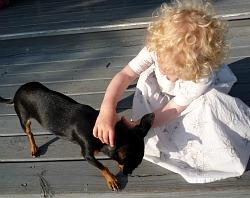 barnochhund